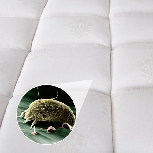 Nettoyage de divan sofa meubles et matelas royal nettoyage for Divan rabais